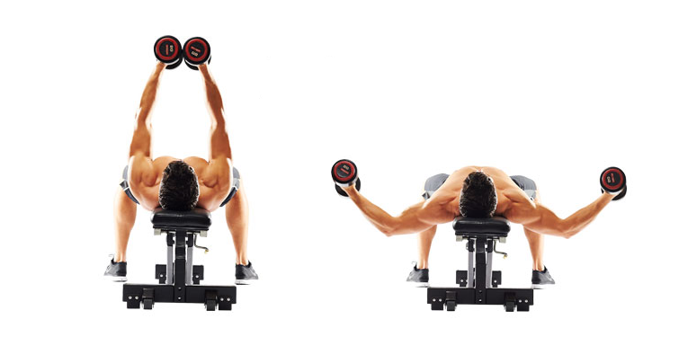 Breeding dumbbells on a horizontal bench