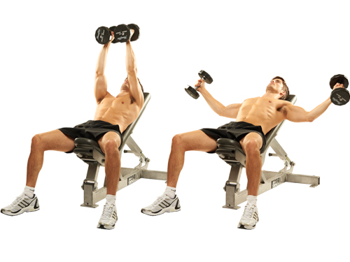 Breeding Dumbbells on an Incline Bench